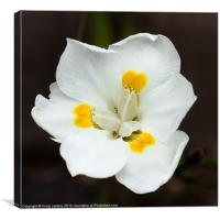 Pretty white flower, Canvas Print