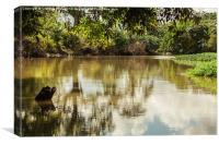 sarapiqui river scene