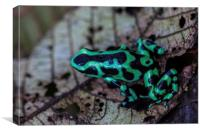 Black and green poison dart frog, Canvas Print