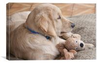 puppy with toy, Canvas Print