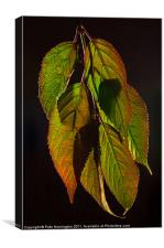 Viburnum backlit leaf composition, Canvas Print