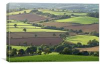 Mid Devon fields, Canvas Print