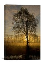 Morning mist through trees, Canvas Print