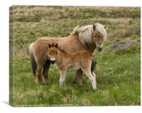 Mother and Foal, Canvas Print