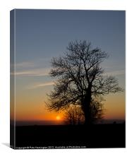 Hill top tree silhouetted against the sunset, Canvas Print