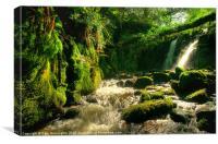 Waterfall on Vennford Brook, Canvas Print