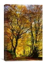 Autumnal lane Dulverton, Canvas Print