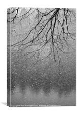 Snow and tree., Canvas Print