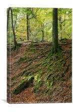 Woodbury Castle woods, Canvas Print