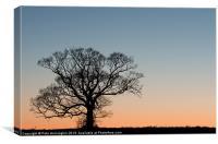 Lone tree at Sunset, Canvas Print