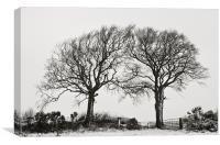 Two snowy trees, Canvas Print