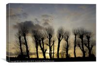 Pollarded Trees at Exmouth, Canvas Print