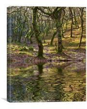 Badgeworthy woods, Canvas Print