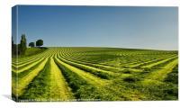 Grass lines, Canvas Print