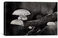 Tree fungi, Canvas Print