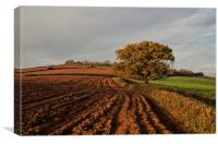 Furrows and Field, Canvas Print