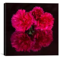 Reflected Carnations, Canvas Print
