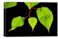 Backlit leaves, Canvas Print