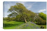 Blue Bells at Cadbury Castle, Canvas Print
