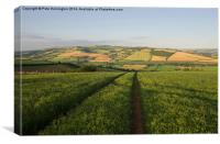 The Exe valley in Mid Devon, Canvas Print