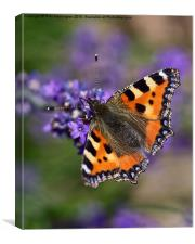 Small Tortoiseshell, Canvas Print