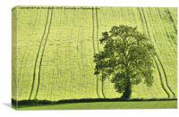 Lone tree, Canvas Print