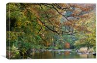 River Barle in Somerset, Canvas Print