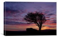 Lone tree near Holwell Tor on Dartmoor, Canvas Print