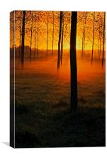 Sunrise through the Trees, Canvas Print