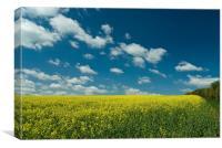 Summer skies above Rape seed crop, Canvas Print
