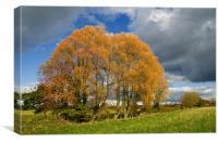 Autumn Tree Clump, Canvas Print