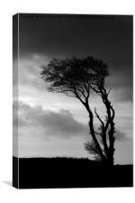 A lone tree at Horns Cross, Canvas Print