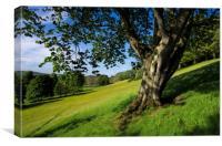 Spring in Mid Devon, Canvas Print