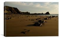 Evening light on Hartland beach, Canvas Print