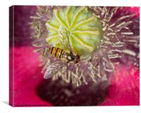 Hoverfly over Poppy, Canvas Print