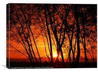 Sunrise Through The Trees, Canvas Print