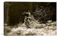 Forest Friend, Canvas Print