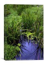 Overgrown Water Way, Canvas Print