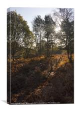 Dunwich Heath Woodland Scene, Canvas Print