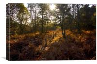 Dunwich Heath Autumn Woodland Scene, Canvas Print