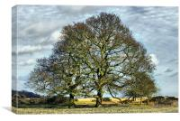 Suffolk Winter Landscape, Canvas Print