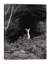 Deer In Black and White, Canvas Print