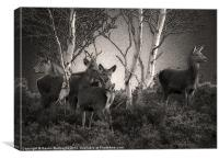 Dunwich Heath Deer, Canvas Print