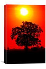 Tree Sunrise, Canvas Print