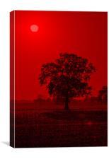 Tree Sunrise #2, Canvas Print