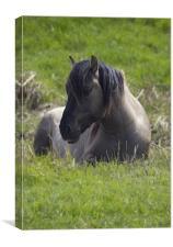 Konic Horse, Canvas Print