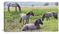 Konic Horses, Canvas Print