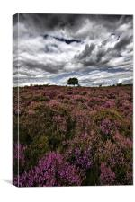 Dunwich Heath Suffolk, Canvas Print