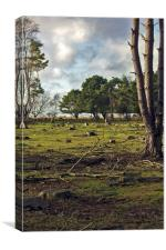 Deer On Dunwich Heath Suffolk., Canvas Print