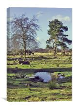 Dunwich Heath, Canvas Print